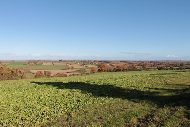 Field to the north of Shepton Beauchamp
