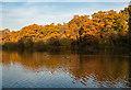 TQ2796 : Jack's Lake, Monken Hadley Common : Week 46