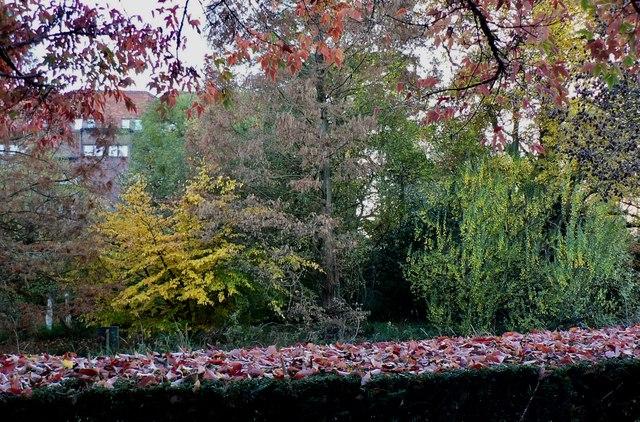 Robinson College garden
