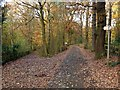 SK4848 : Broxtowe Country Trail in Beauvale woods by Alan Murray-Rust