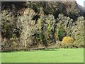 SO5414 : Trees beside the River Wye by Philip Halling