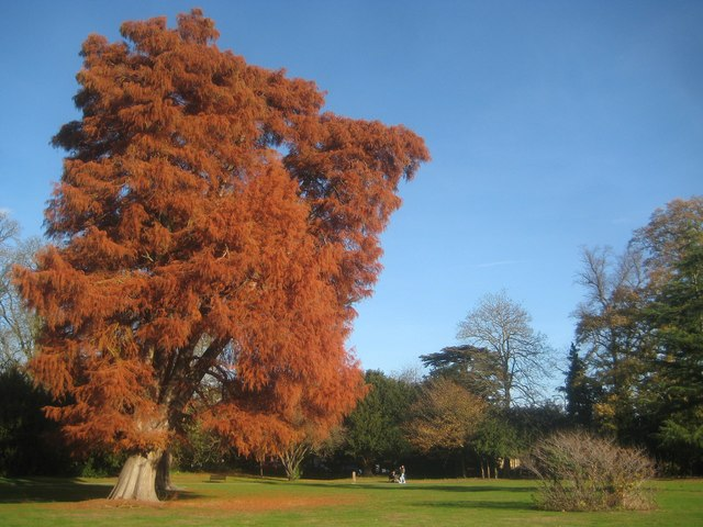 Canons Park: Specimen tree