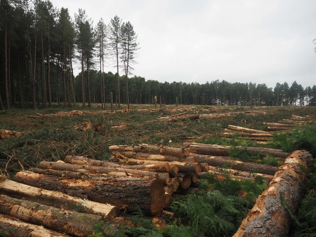 Clear felled area of Thetford Forest