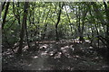TQ1093 : Oxhey Woods by N Chadwick