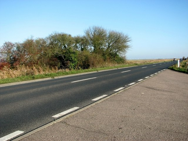 A clump of trees beside the Acle Straight