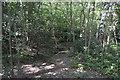 TQ1192 : Oxhey Woods by N Chadwick