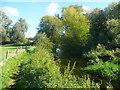 TL4944 : The River Cam or Granta, Hinxton by Humphrey Bolton