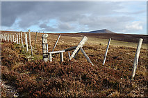 NJ2031 : Broken-down Fence by Anne Burgess