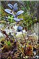 NJ2033 : Black Leaves by Anne Burgess