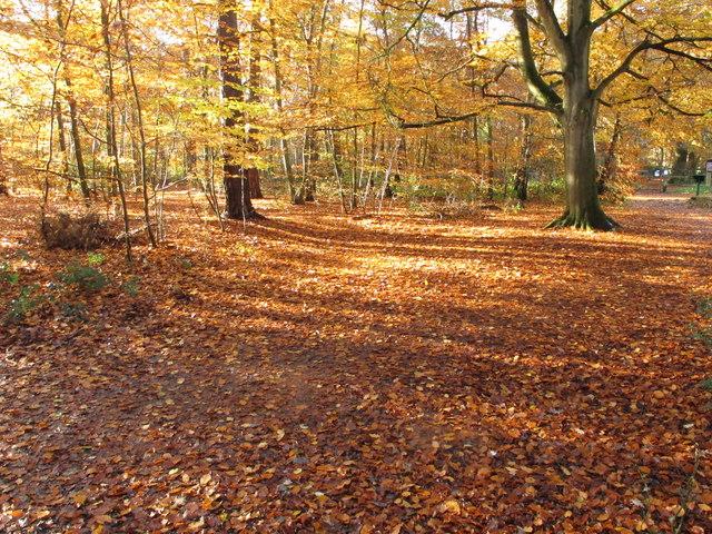 Autumn leaves in Burnham Beeches, near cafe