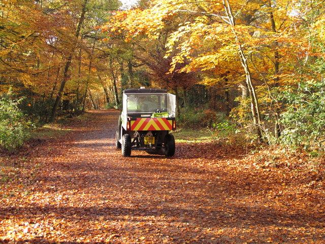 Burnham Beeches ranger on quad bike on autumn leaves