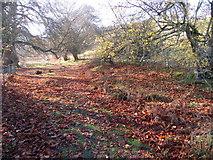 SJ1663 : Autumnal footpath by John H Darch