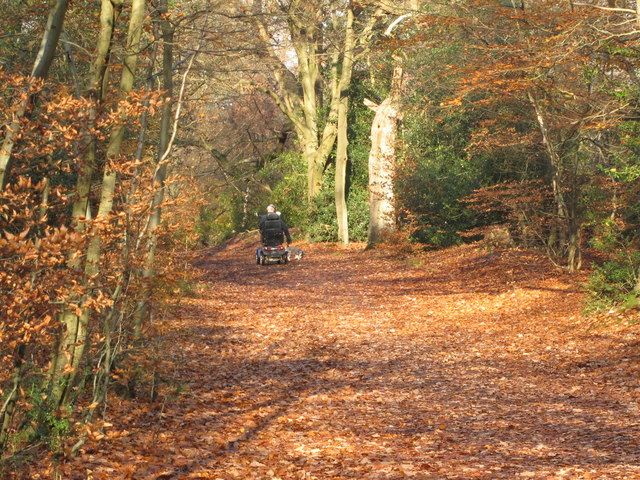 Mobility scooter in Burnham Beeches, with autumn leaves