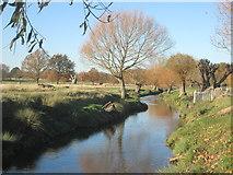 TQ2173 : Beverley Brook in Richmond Park by Peter S