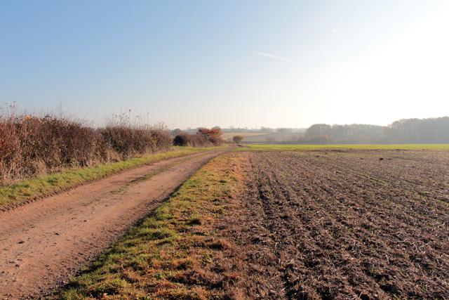 Farmland at Sutton Cheney