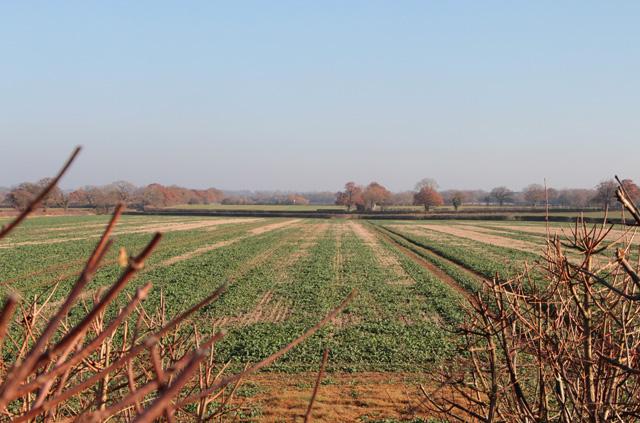 Battle of Bosworth, by Fenn Lanes