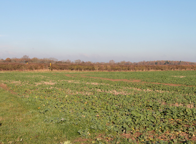 Field at Fen Lane Farm