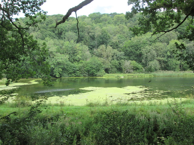 One  of  the  ponds  in  Nettle  Dale