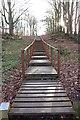 NS5320 : Woodland Walkway by Billy McCrorie