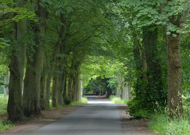 Lane through the Tentsmuir Forest