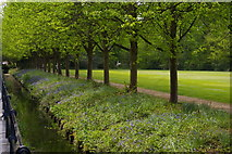 TL4458 : The Backs, Cambridge: Trinity College grounds from Garret Hostel Lane by Christopher Hilton