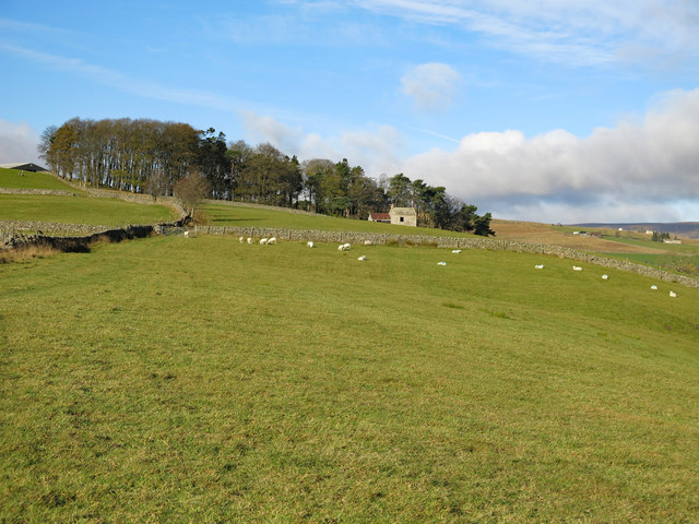 Farmland southeast of Ullsfield Plantation (2)