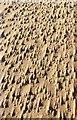 SS8376 : Sand sculpture by Alan Hughes