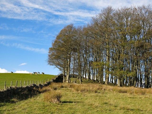 The southeast corner of Ullsfield Plantation
