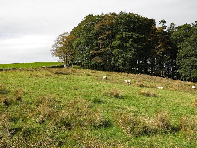 Rough pasture and Ullsfield Plantation