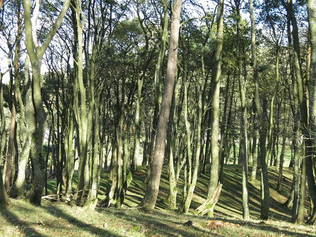 Ullsfield Plantation