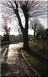 SX9065 : Parkhurst Road, Torre by Derek Harper