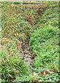 SX9063 : Torre valley stream by Derek Harper