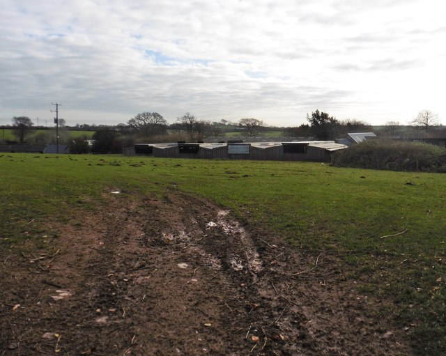Livestock sheds at Great Coombshead