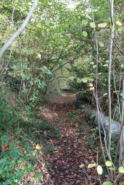 In Swithland Wood