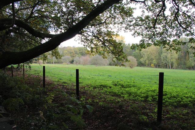 Open meadow in Swithland Wood