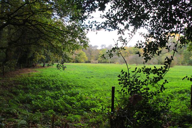 Open grassland in Swithland Wood