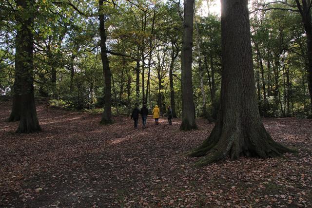 Walking in Swithland Wood