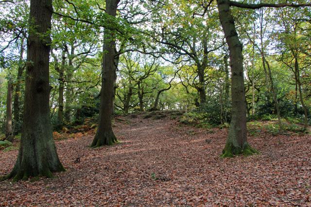 Amongst the oak trees