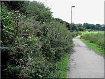 TQ7809 : Footpath by South Saxons playing fields by Patrick Roper