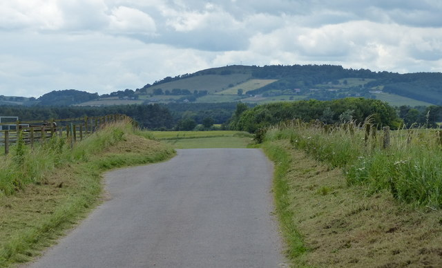 Lane on the edge of Tentsmuir Forest