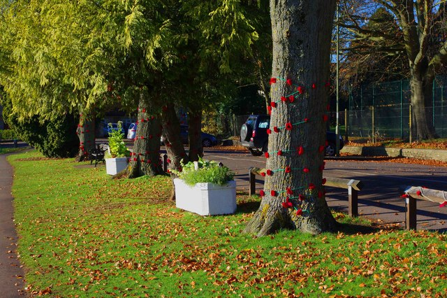 Poppies on trees in The Leys recreation ground, Witney, Oxon