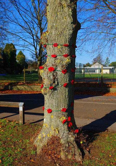 Tree decorated with poppies in The Leys recreation park, Witney, Oxon