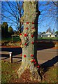 SP3509 : Tree decorated with poppies in The Leys recreation park, Witney, Oxon by P L Chadwick