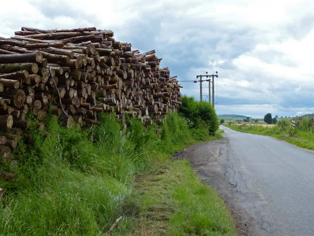 Timber stack at Rhynd Wood