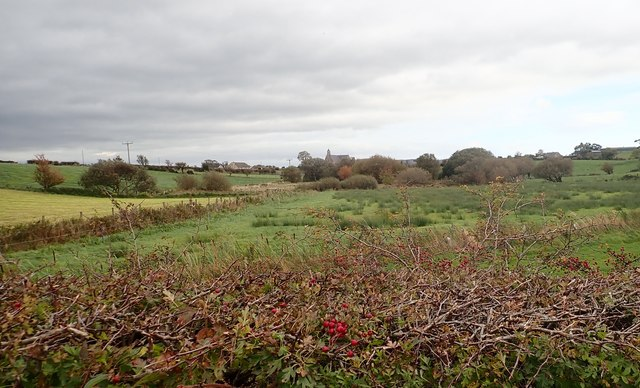 View ENE across an interdrumlin wetland hollow from the Ballykeel Road