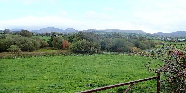 Wooded wetland in Ballykeel TD
