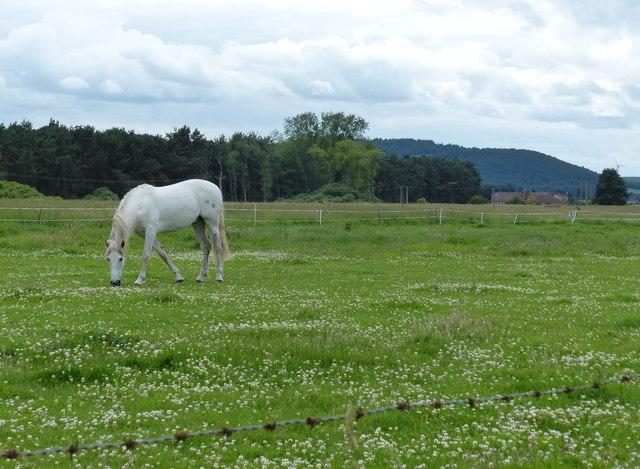 Horse at Craigie, Fife