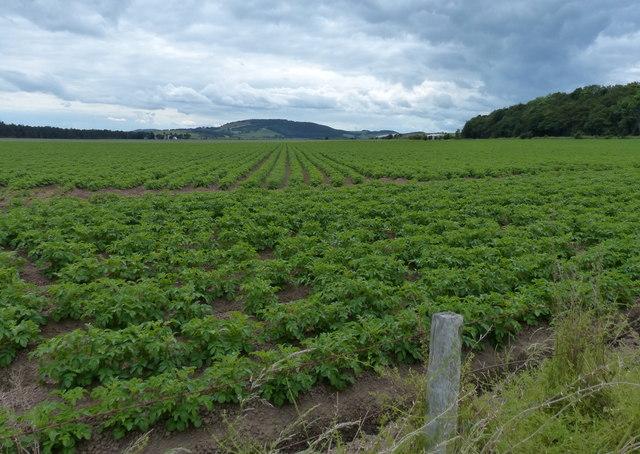 Farmland near Craigie Hill