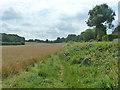 TQ4258 : Path behind Aperfield Road, Biggin Hill by Robin Webster