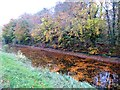 N3951 : Autumn on the Royal Canal by Oliver Dixon